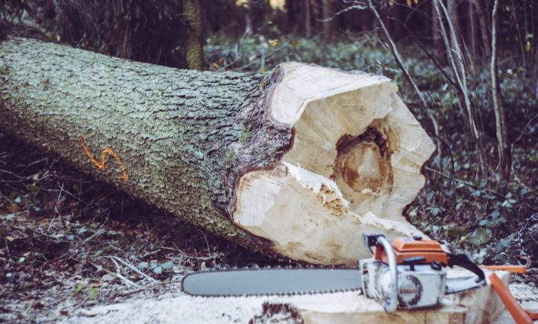 Photo of When To Call Tree Removal Services In Nassau County NY? Find Here!