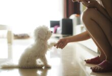 Photo of Investing In Dog Day Care Industry: Things To Know